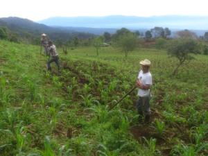 Campesinos (Farmers) near Carrizal