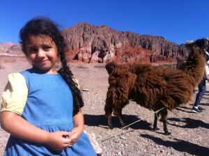 North of Argentina LLamas