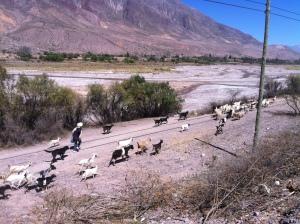 Tilcara, Northern Argentina
