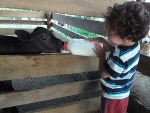 Feeding our calf!